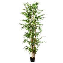 Plante bambou en pot - 175 cm