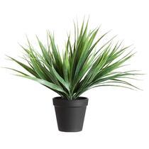 Gazon dans pot - 30 cm