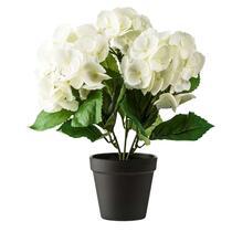 Deze mooie hortensia staat leuk en mooi in ieder interieur. Deze kunstplant staat in een zwarte pot en is 30 cm hoog. Een echte eyecatcher!