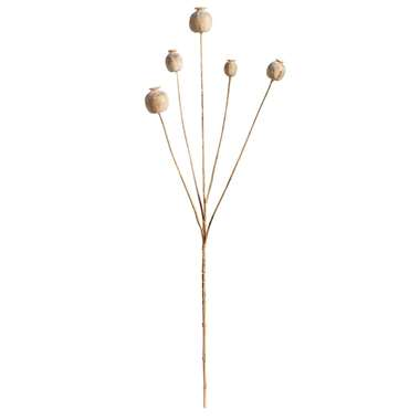 Leen Bakker Papaver Seed Spray - beige - 75 cm