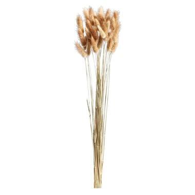 Droogbloemen Lagurus - bruin - 45-50 cm - Leen Bakker