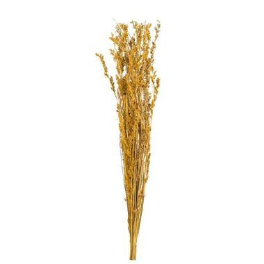 Droogbloemen Alfonso gras - oker - 100 cm - Leen Bakker