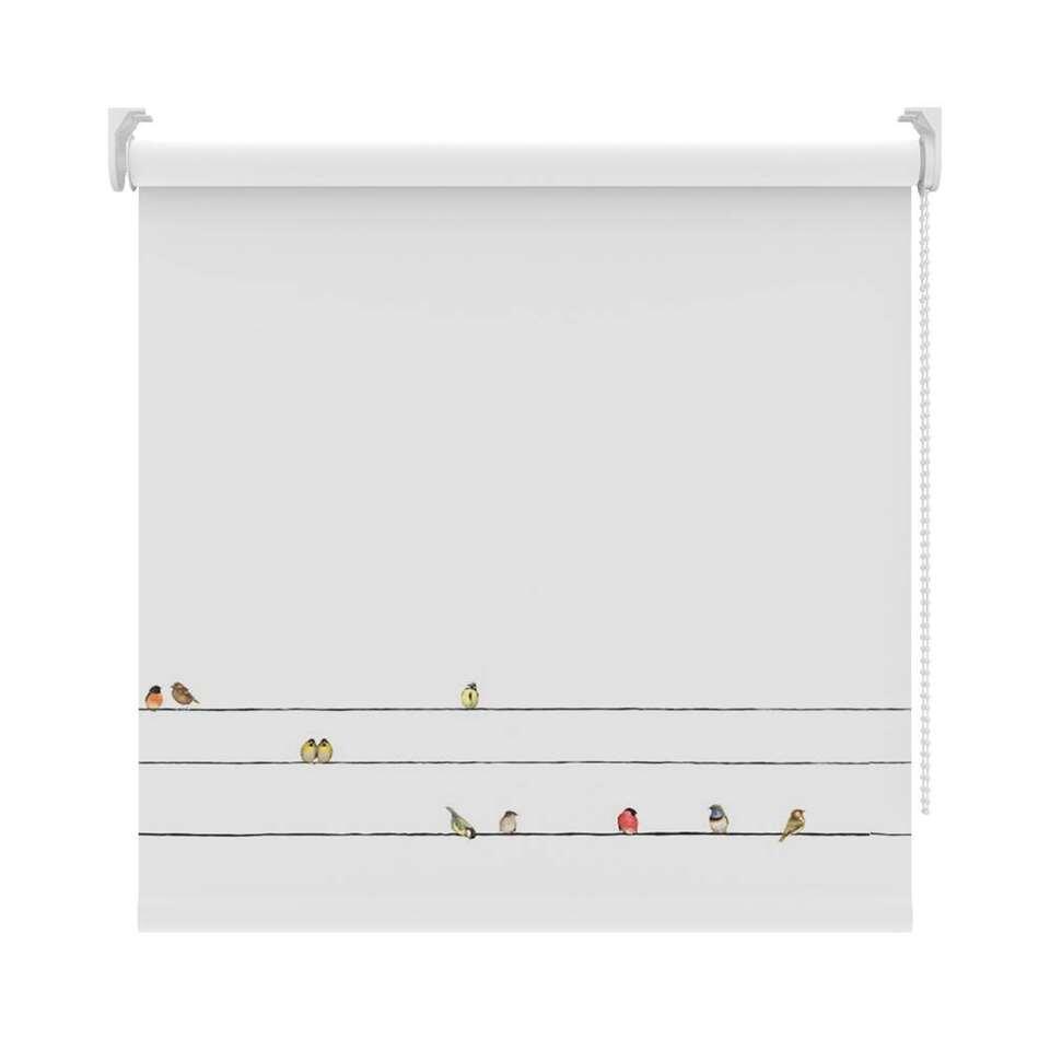 Rolgordijn verduisterend - vogels/wit - 120x190 cm - Leen Bakker