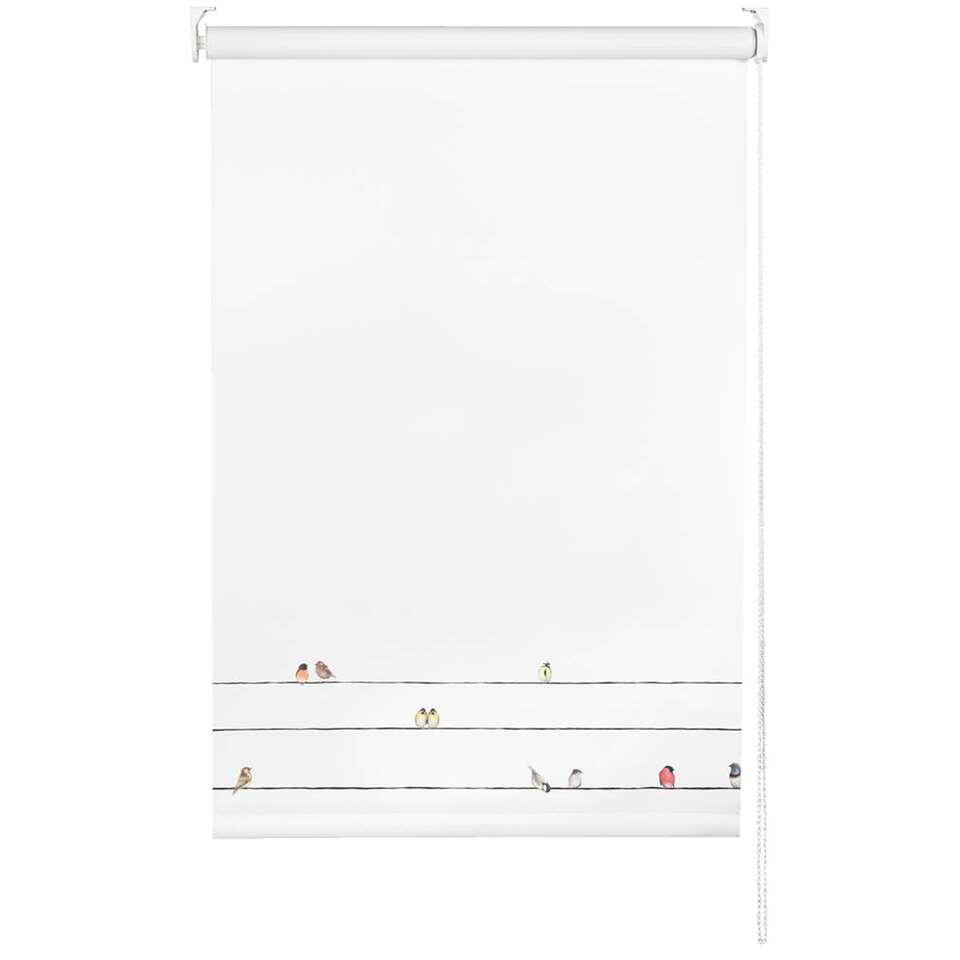 Rolgordijn verduisterend - vogels/wit - 210x190 cm