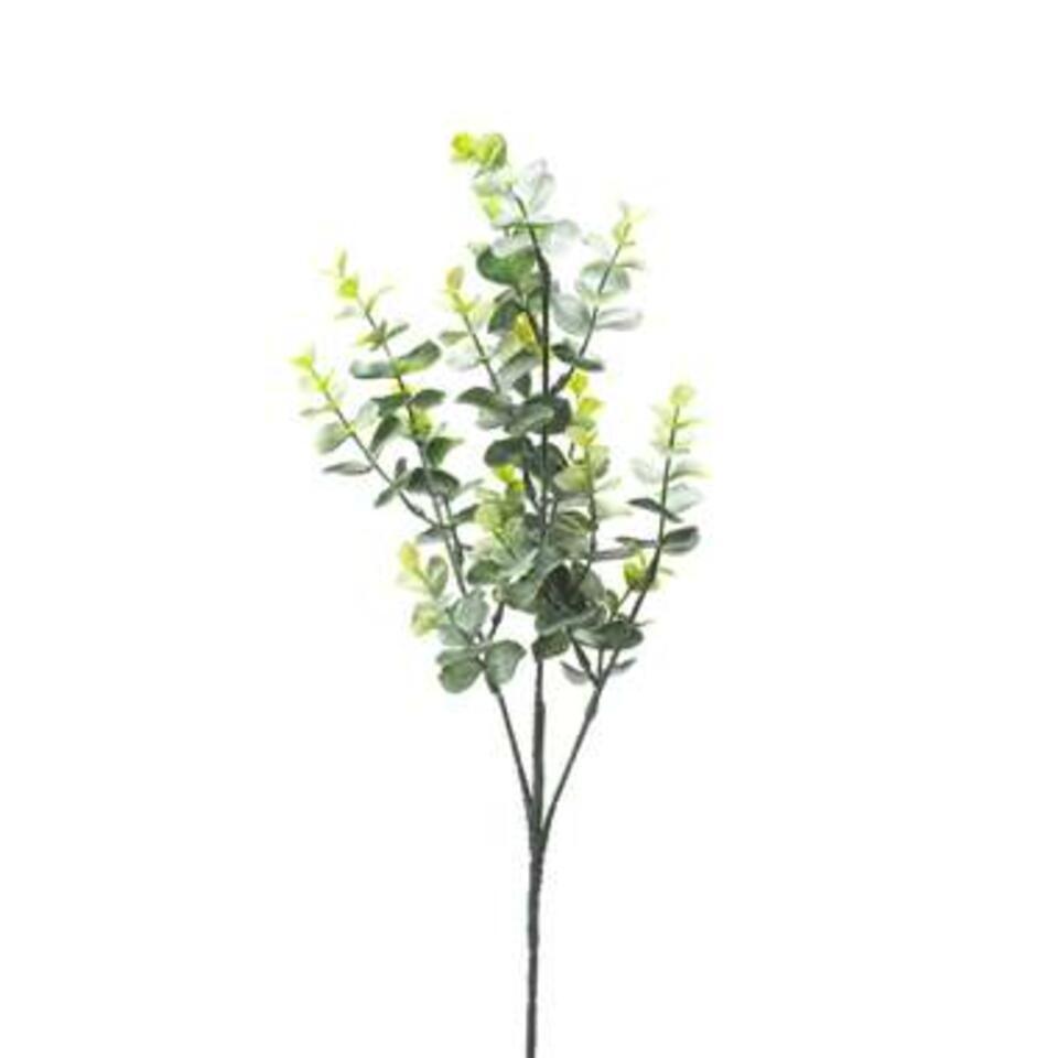Eucalypthus Spray is groen en heeft een afmeting van 60 cm.
