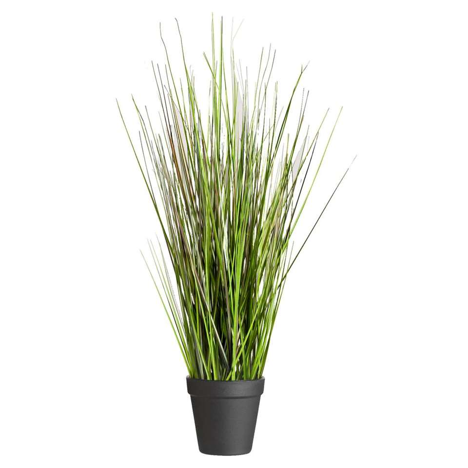 Grass Bush in pot – 53 cm – Leen Bakker