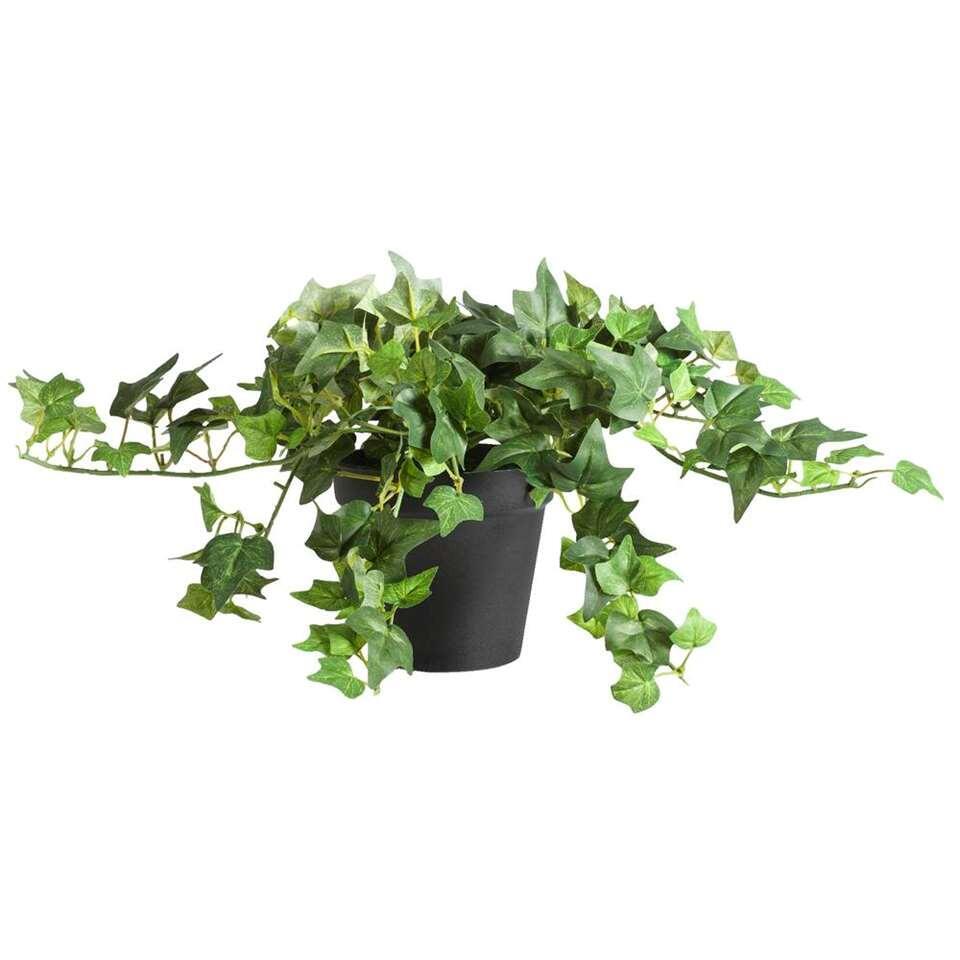 Klimop in pot – groen – 20 cm – Leen Bakker