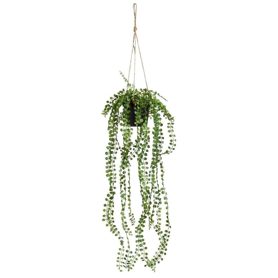 Ficus Pumila in pot – groen – 60 cm – Leen Bakker