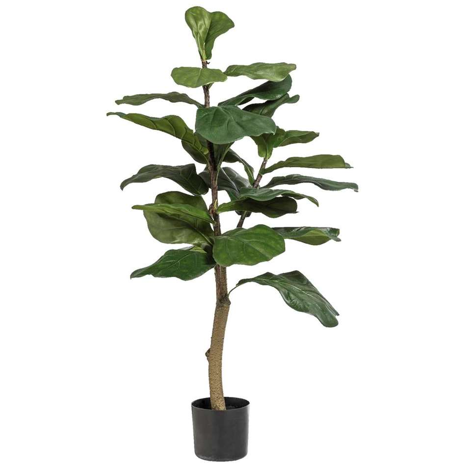 Ficus Lyrata in pot – 90 cm – Leen Bakker