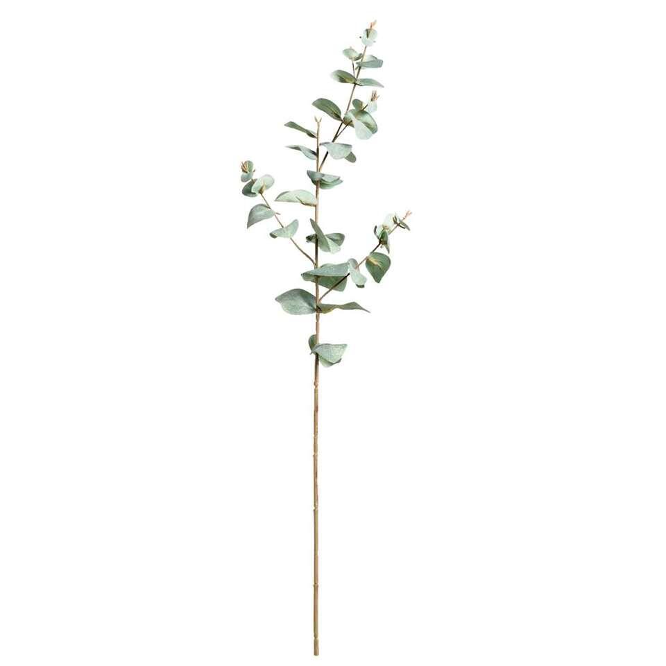 Eucalytus tak – groen – 68 cm – Leen Bakker