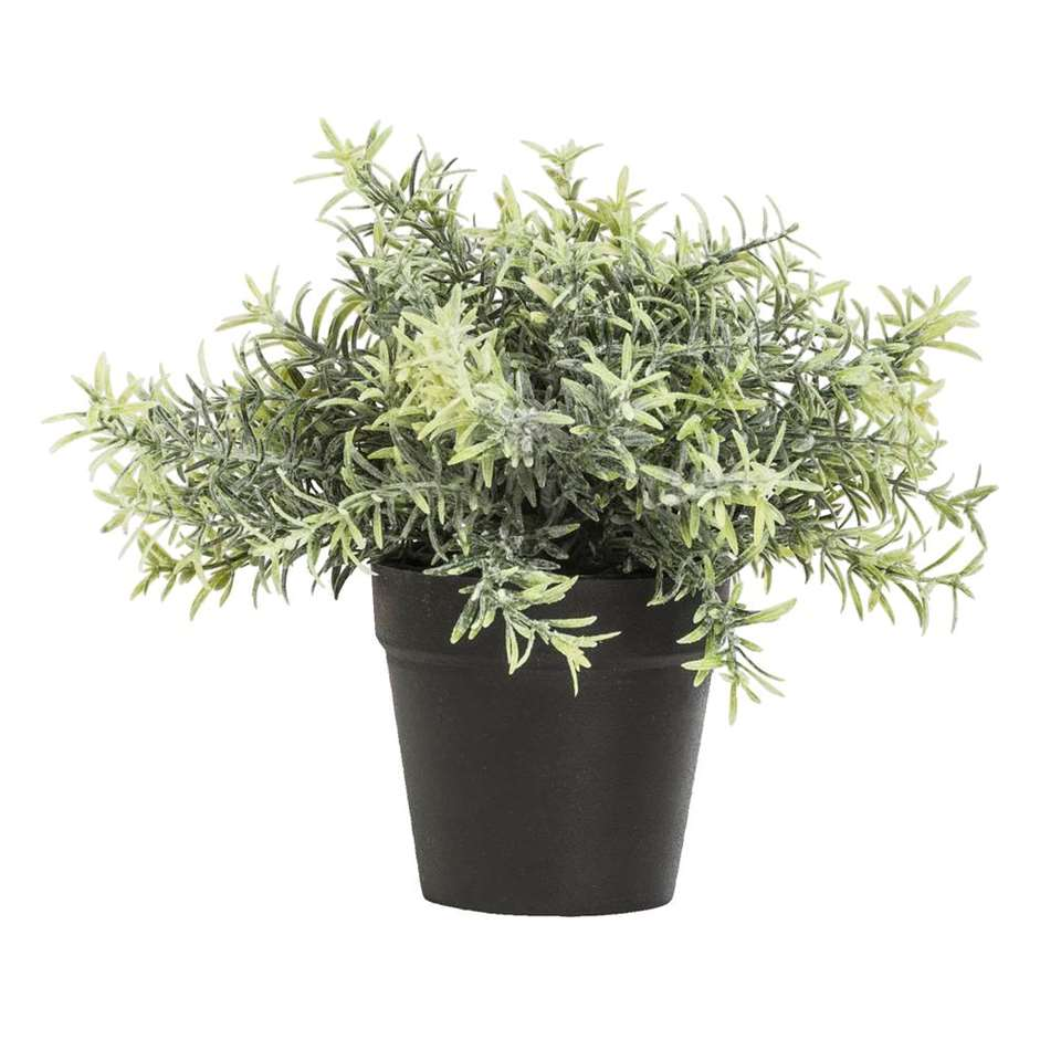 Rosemary plant in pot - groen - 22 cm - Leen Bakker