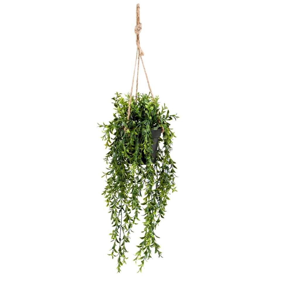 Boxwood kunst hangplant is groen en heeft een afmeting van 50 cm.