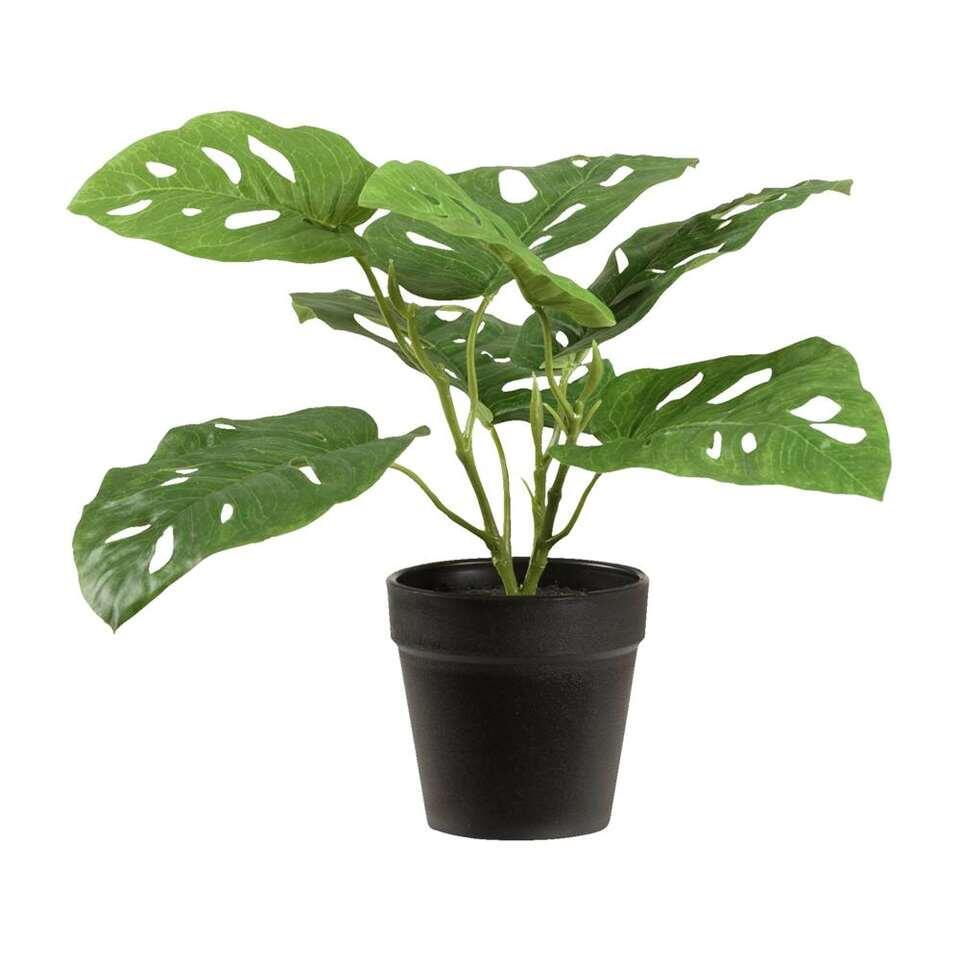 Kunstplant Monstera Monkey in pot is groen en heeft een afmeting van 30 cm.