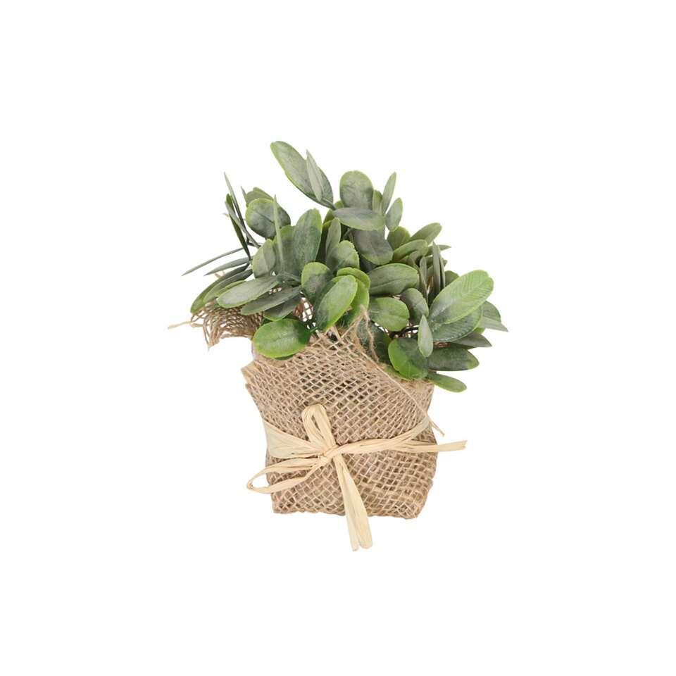 Plant Max – groen/bruin – 12×8 cm – Leen Bakker