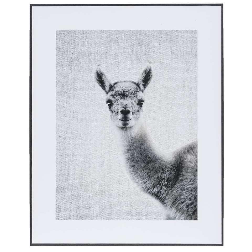 Schilderij Lieve Lama – zwart/wit/grijs – 40×50 cm – Leen Bakker