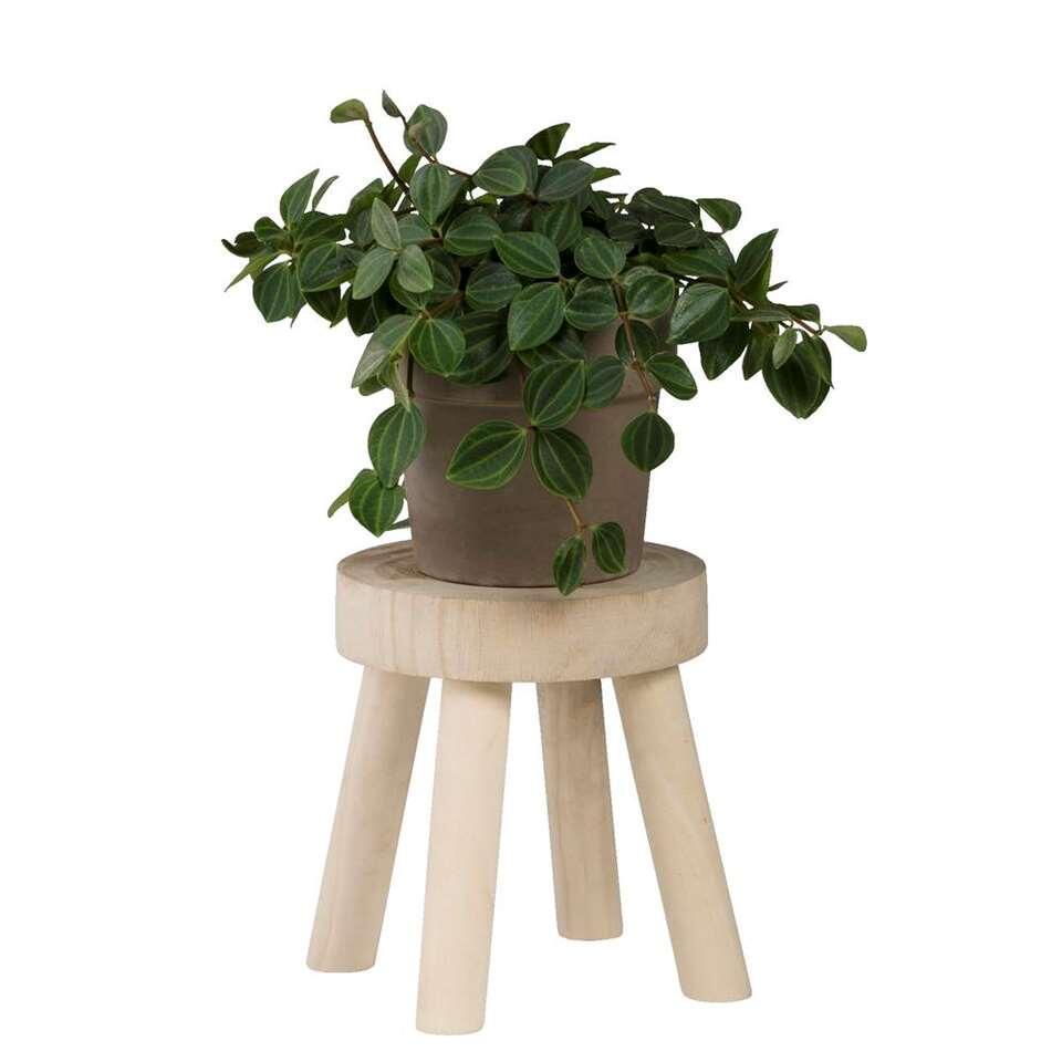 Plantentafel Rino - hout - 17xØ16 cm - Leen Bakker