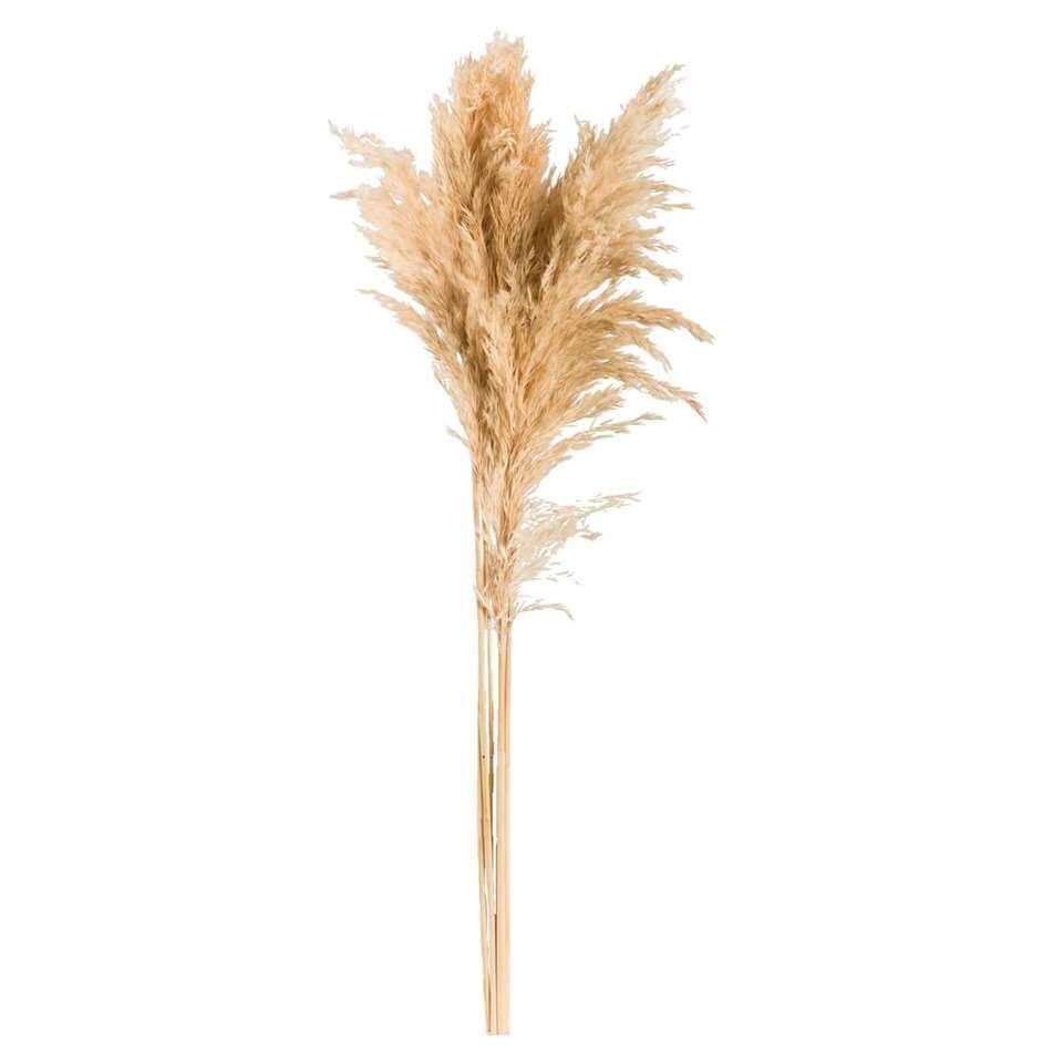 Pampas gras (6 stuks) – crème – 75 cm – Leen Bakker