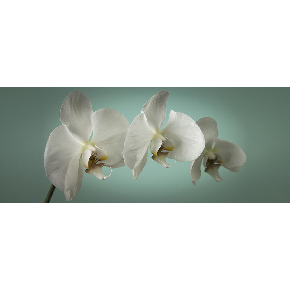Graham & Brown canvas Teal Orchid - blauw - 100x40 cm