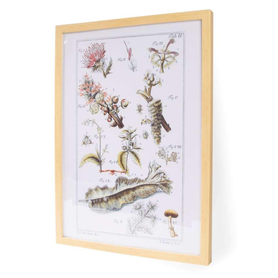 Art For The Home schilderij Botanisch - multi - 40x60 cm - Leen Bakker